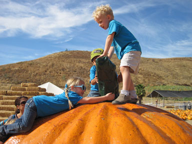 """Busy Bears""  Cosette ""Coco"" Rowlands (L) and Matthew Kruse (R) have mastered the art of pumpkin climbing during the class field trip to Lombardi Ranch."