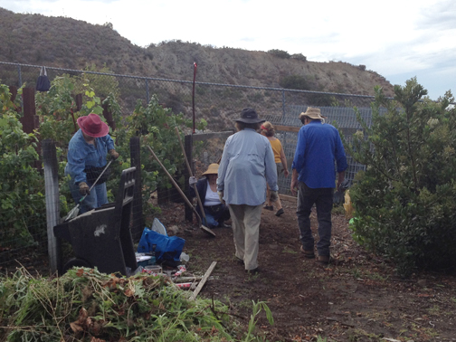 Photos by Marissa GOULD Members of the Stone Barn Conservancy that oversees the vineyards at Deukmejian were ready to do some weed abatement on Saturday morning.