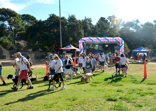 File photo The 2013 Mutt Strut raised thousands of dollars for the Los Angeles California Council of the Blind.