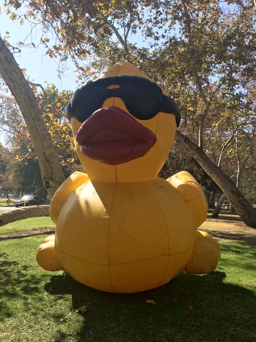 Splish Splash – the Ducks were in Glendale - Crescenta Valley Weekly